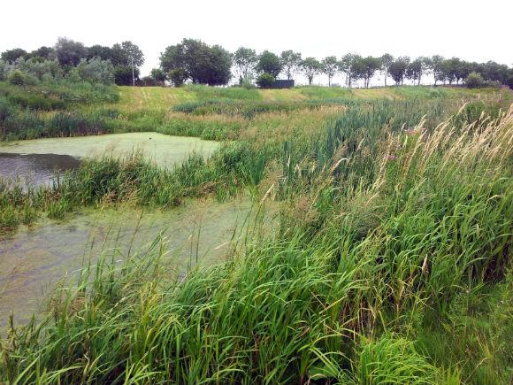 Natuurstrook bij Ringdijk tussen Indische Buurt en Sciencepark
